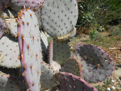 cactus, spiritual awakening, spiritual pain, painful issues, self-hatred