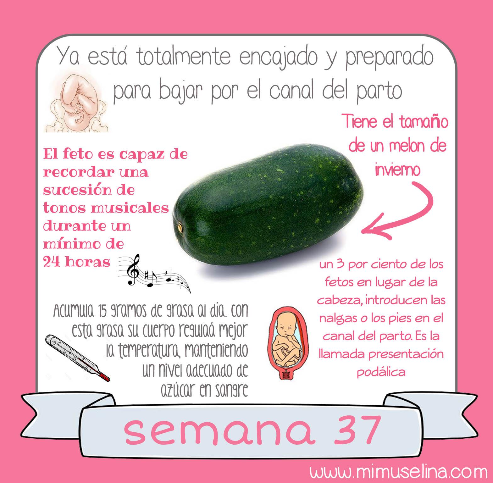 semana 15 de embarazo tamano del bebe