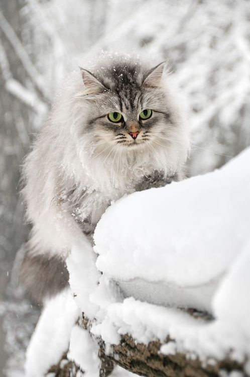 Beautiful winter scene with fluffy kitten cat in snow