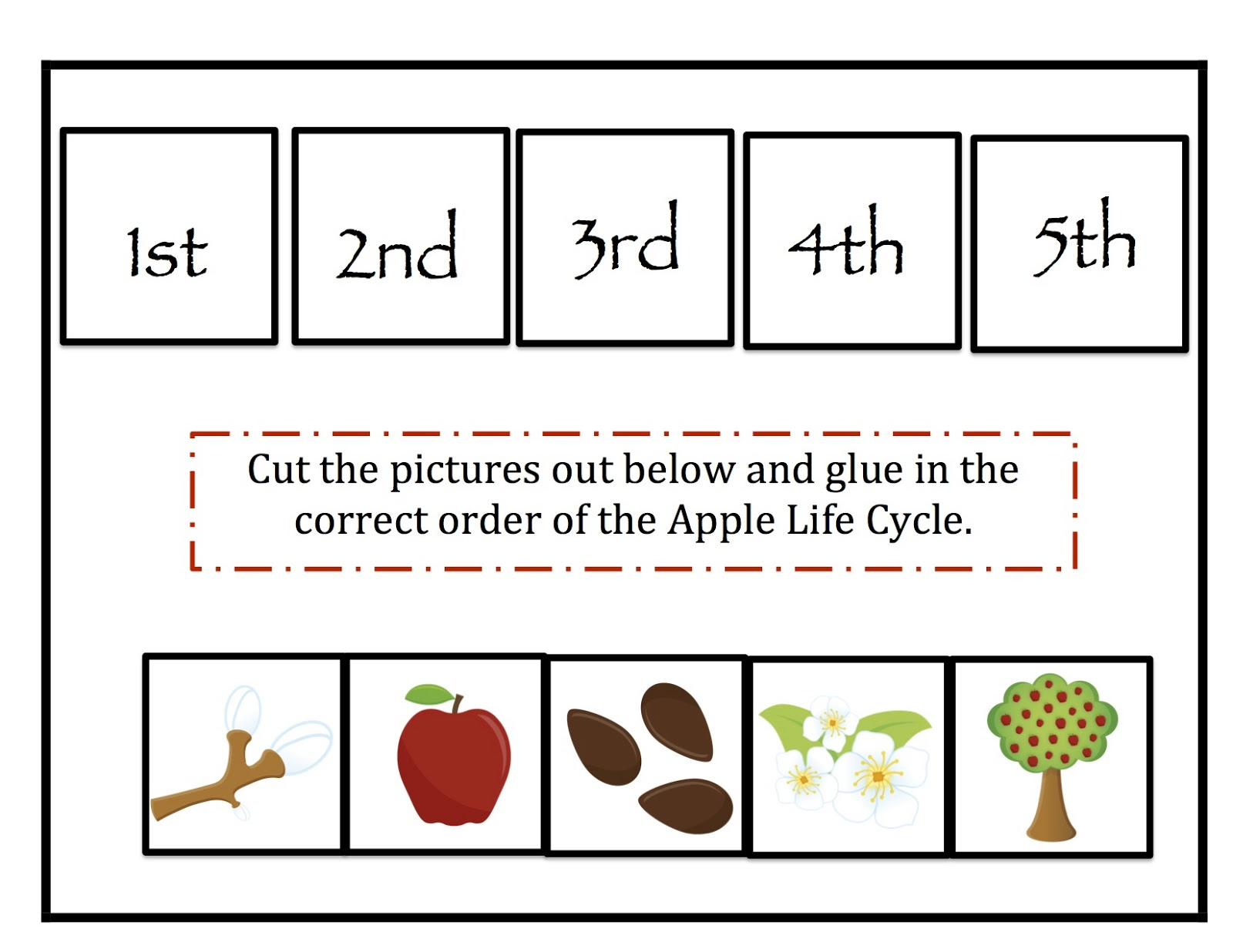 Life Cycle Of A Plant Worksheet | Search Results ...