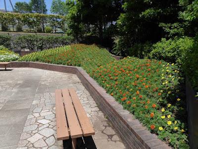 枚方市・市民の森(鏡伝池緑地) コミュニティゾーン 花壇