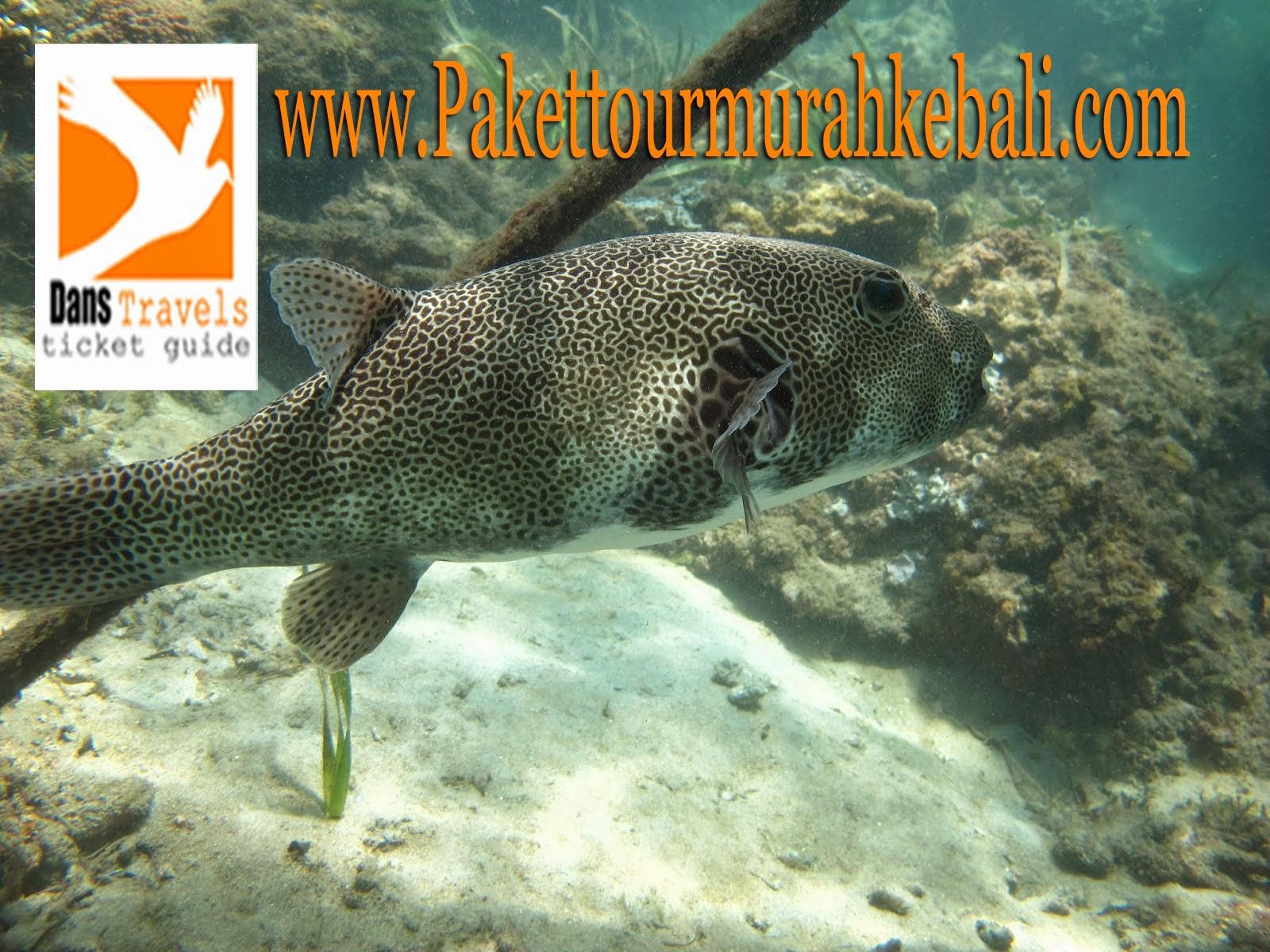 Seawalker Sanur - Sanur Waterwalk - Underwater Sanur