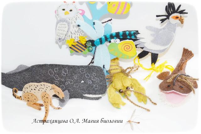 KOAPP-sova-gepard-martyshka-strekoza-kashalot