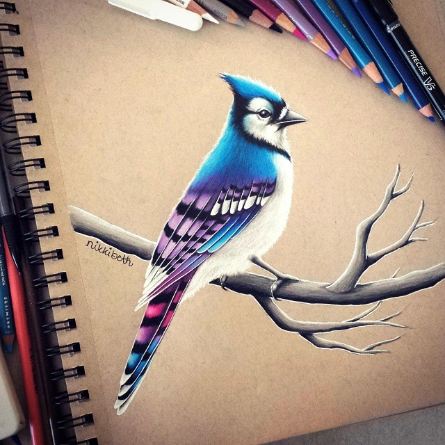 01-Pink-Purple-Blue-Jay-Nikki-Beth-Animal-Portrait-Drawings-in-different-Styles-www-designstack-co