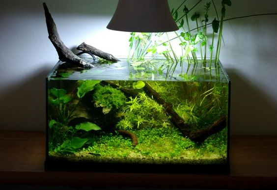 Aquascape Mini