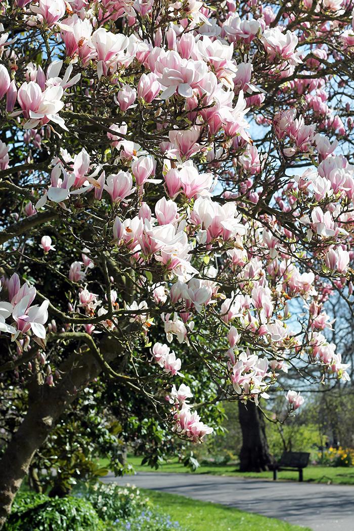 Spring Blossoms Southampton