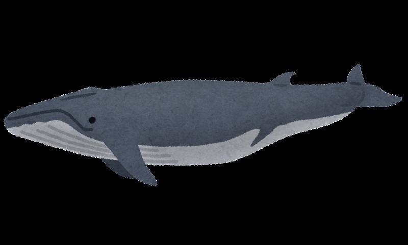 「クジラ イラスト ナガスクジラ」の画像検索結果