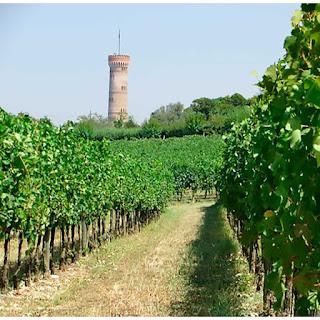 vigne san martino della battaglia