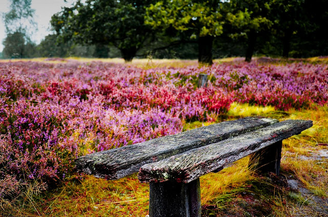 https://pixabay.com/en/bank-heathland-old-romantic-nature-2062530/
