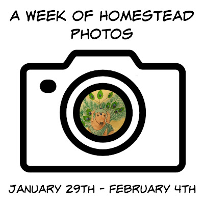 A Week of Homestead Photos January 29th - February 4th