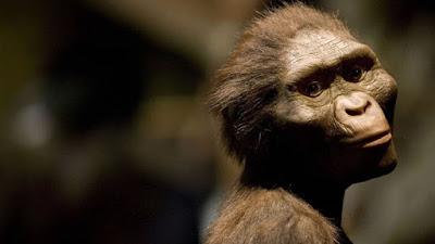 http://greensavers.sapo.pt/2016/08/29/lucy-o-nosso-antepassado-mais-antigo-morreu-ao-cair-de-uma-arvore-dizem-os-cientistas/