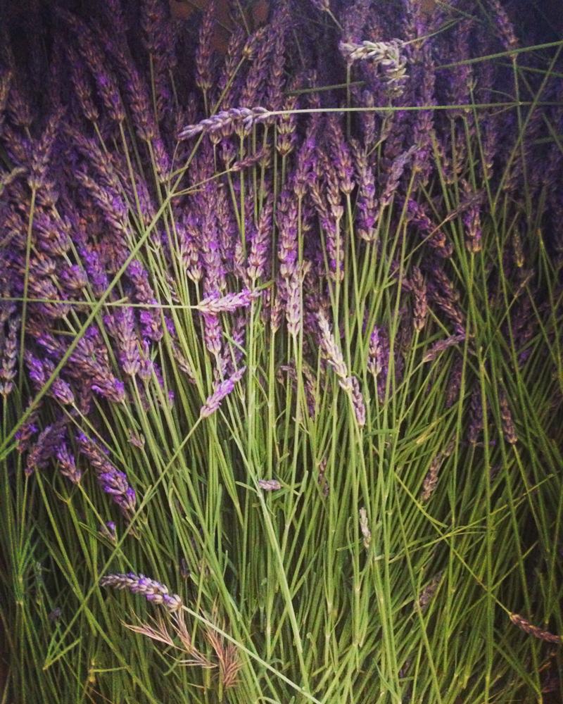 bouteille de lavande lavender bottle