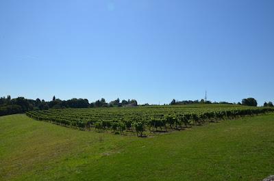 Vinyes del château de Monbazillac