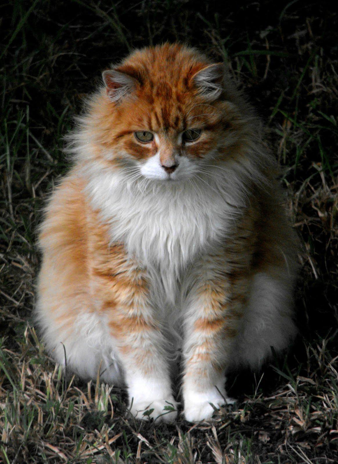 outdoor cat run
