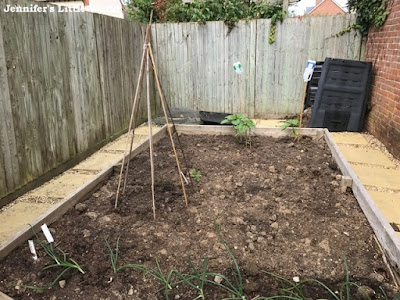 Vegetable patch in garden