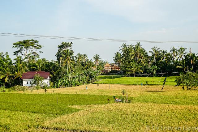 Saudare Home - Pakudui Tegallalang - Bali