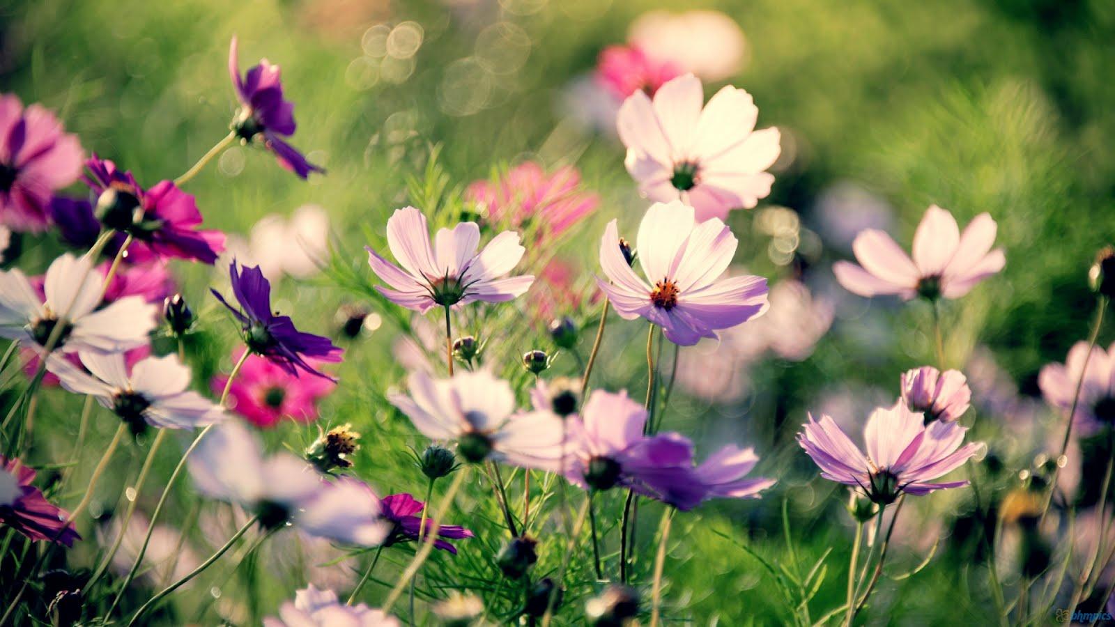 flowers desktop wallpaper 1280x800 - photo #22