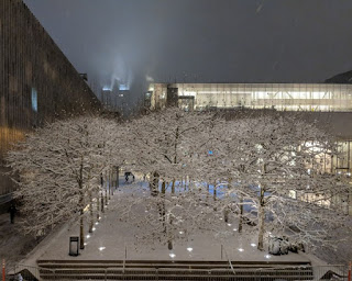 Snow-dusted bare trees, lit up at night, Lincoln Center, New York, New York