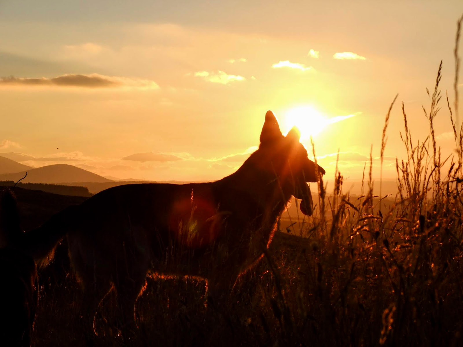 A German Shepherd silhouette with mountains in the distance at sunset.
