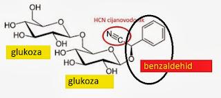 Vitamin B17 magija prevaranata - leatril krvopije su među nama