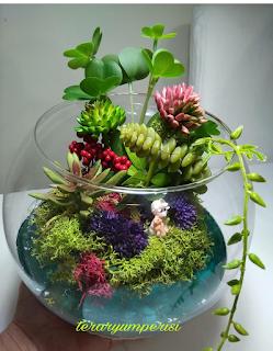 teraryum perisi- terra botanik çiçekçilik