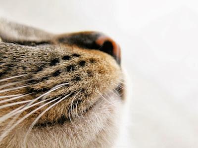 Sentido orientación del gato