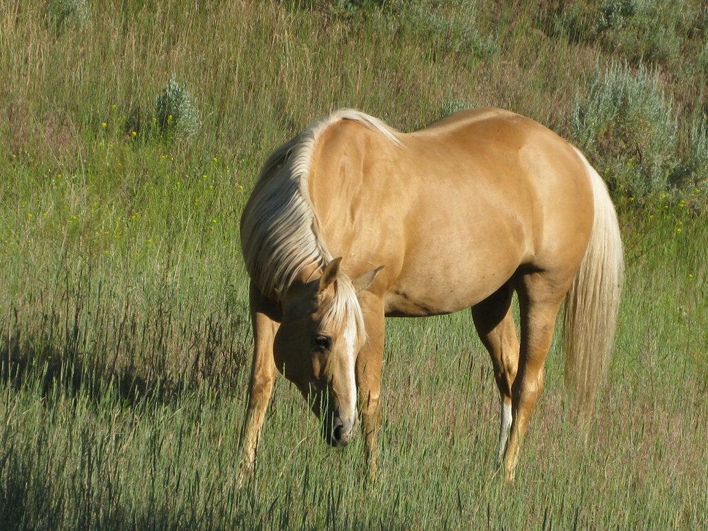 palomino foal - photo #37