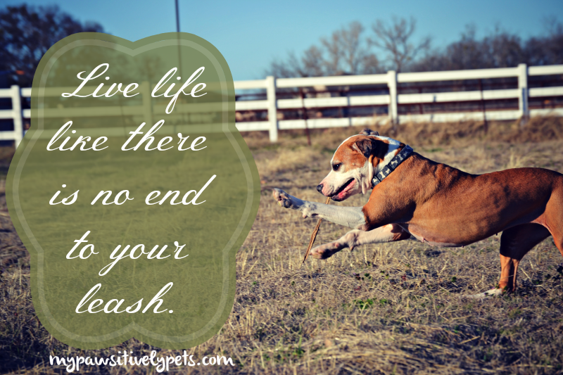 Live Life Like There Is No End To Your Leash | Pawsitively Pets