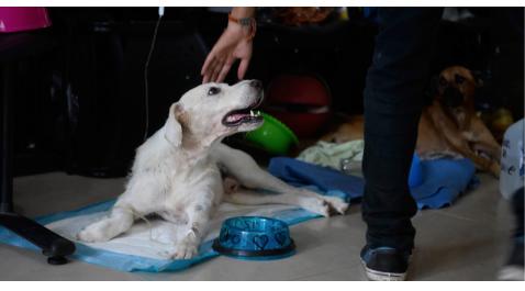 En Ecuador, piden que abandono y venta de animales de compañía sea sancionado por ley