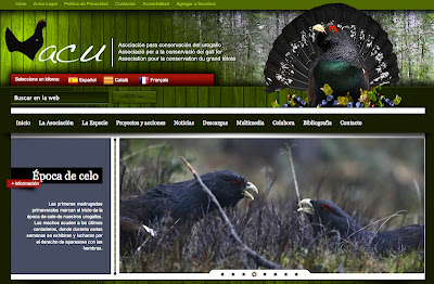 New news, Capercaillie