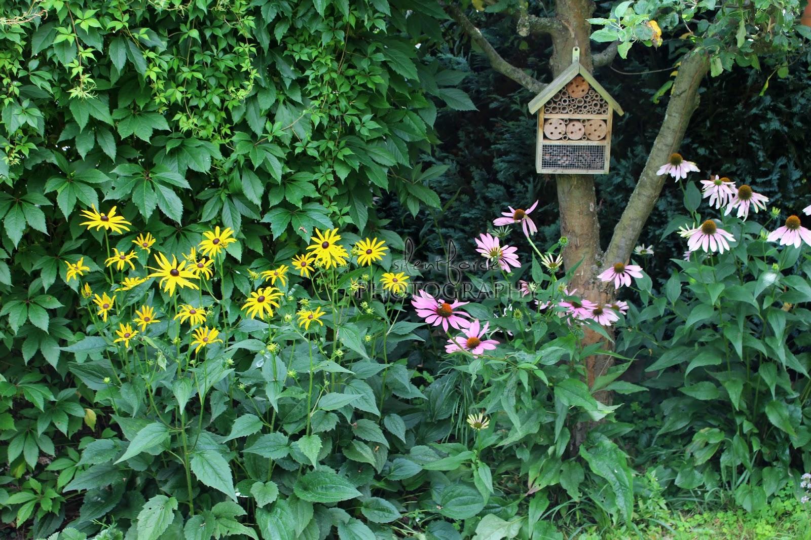 zauberhafter sonnenhut silentforce garden. Black Bedroom Furniture Sets. Home Design Ideas