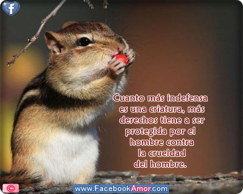 Imagenes Bonitas Con Frases De Animales Para Compartir En Facebook