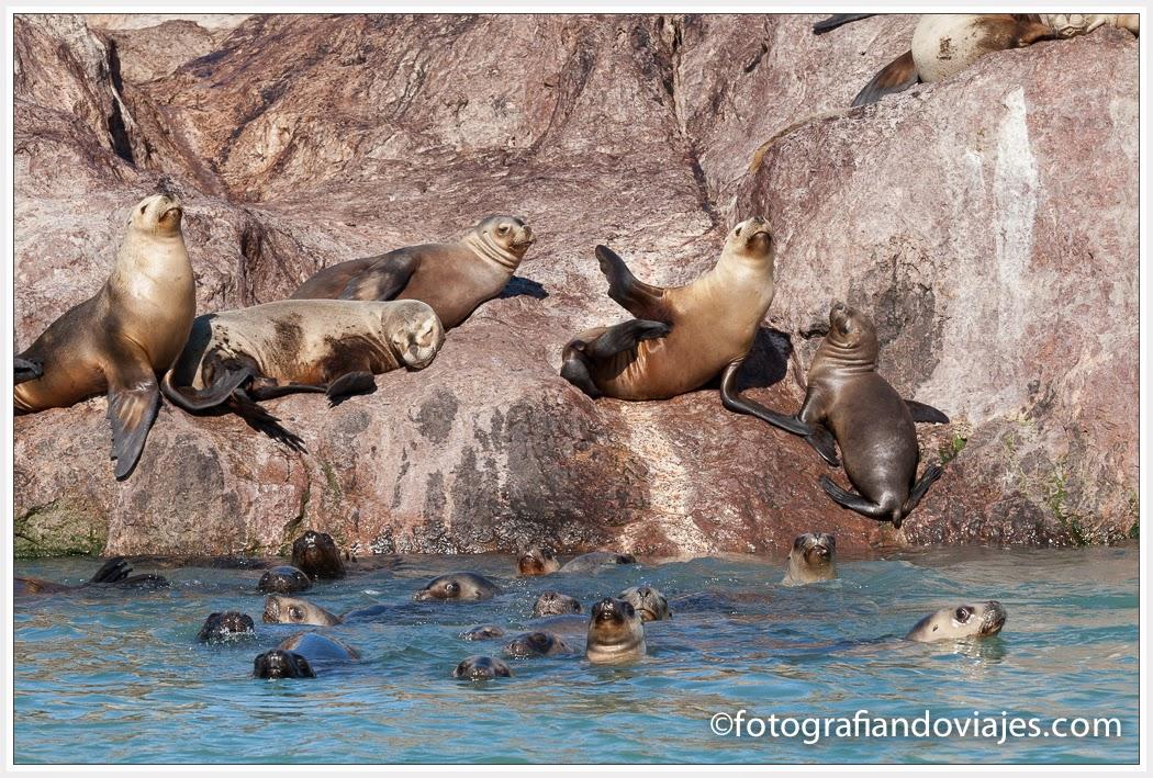 colonia de leones marinos