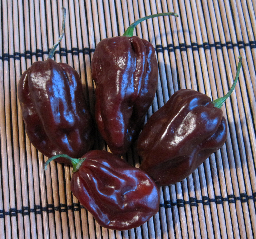 Scotch Bonnet Chillies
