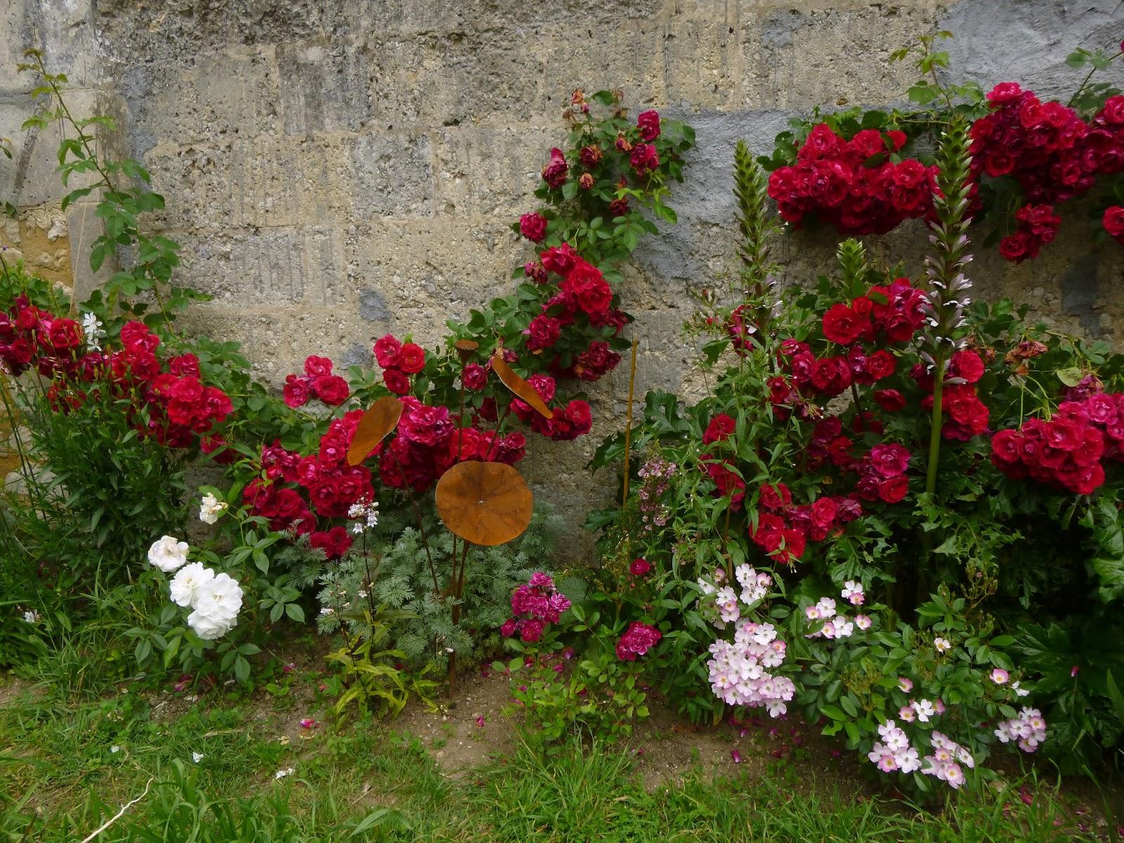 Cagouille 39 s garden le massif des rosiers grimpants rouge en d tail partie des rosiers 3 4 - Quand couper les rosiers ...