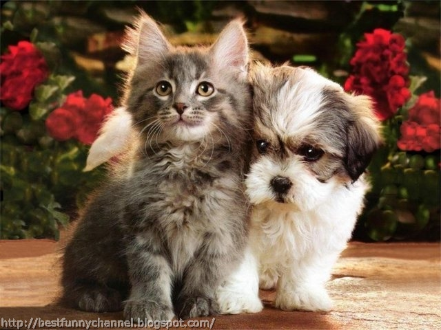 Cute puppy and kitten.
