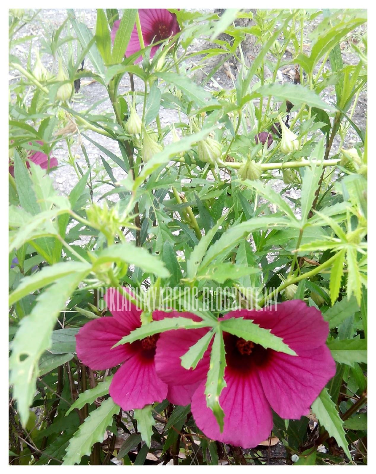 Bila bunga berkembang mekar......