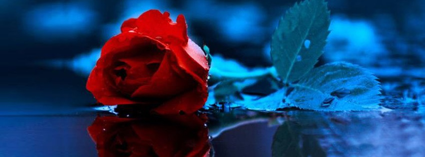Hd Wallpapers Of Couples With Quotes Red Rose Facebook Timeline Covers Fb Status