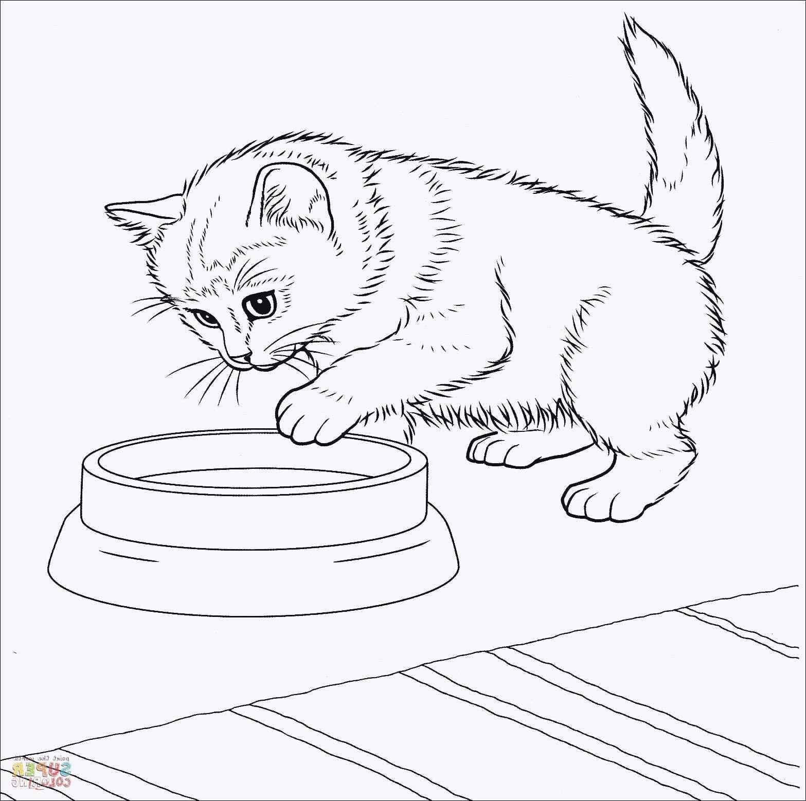 katzenbilder zum ausmalen  ausmalbilder einhorn