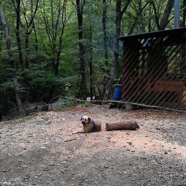 Cão longo com uma seção ausente