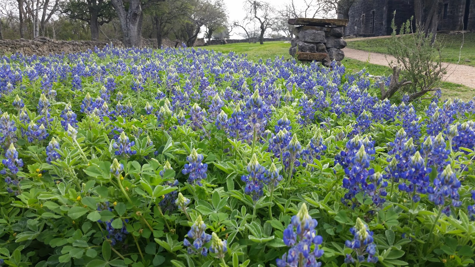 Travels And Trials Of Rv Life Texas Spring Wild Flowers