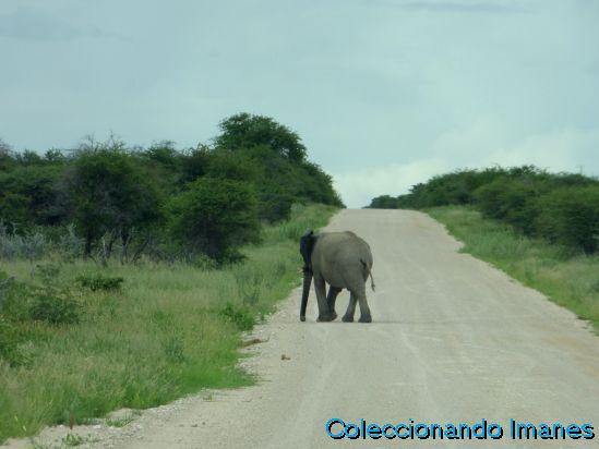 Elefante en Etosha