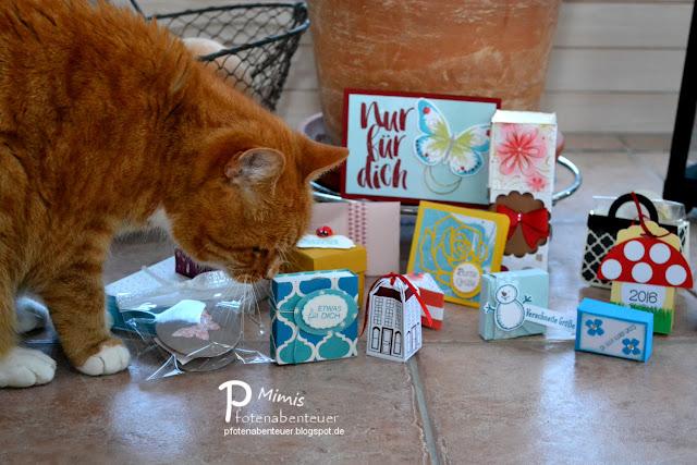 Katze Mimi untersucht die erhaltenen Swaps