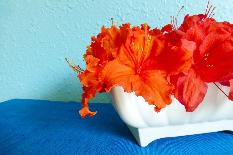 405-USA, vintage ceramic planter, vintage ceramic planter 405-USA, rhododendrons, rhodies, rhododendrons in vintage ceramic planter, rhododendrons in vintage 405-USA ceramic planter