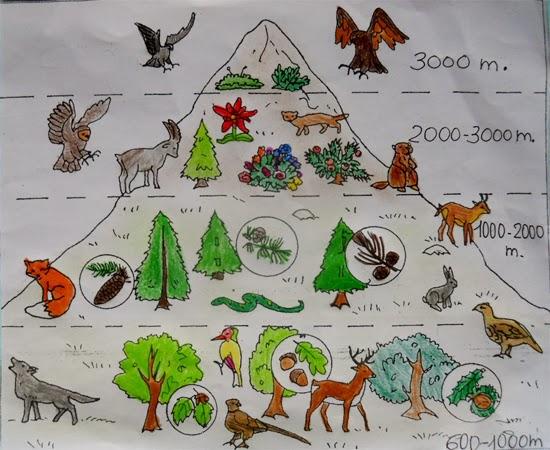 Lozainetto geografia la flora e la fauna delle alpi - Immagini da colorare delle montagne ...