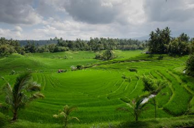 20+ Poto Pemandangan Sawah Yang Bikin Ingat Suasana Pedesaan