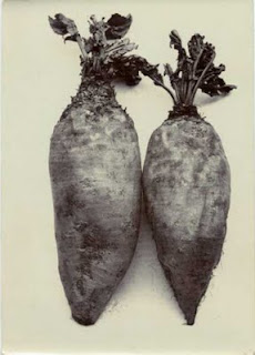 Charles Jones vegetable photography