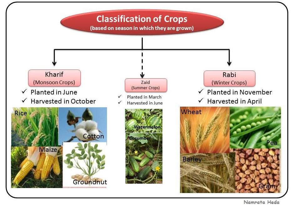 Image result for examples of rabi kharif and zaid
