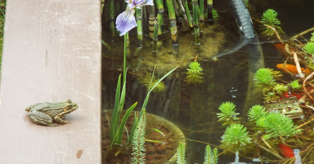 Jardin aux quatre saisons d 39 un bassin na t l 39 amiti for Alexandre jardin nu