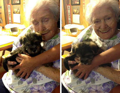 My Oma meeting my puppy, Magnus, for the first time.  She couldn't understand why I wanted a second dog…but it was love at first sight!  She and Magnus bonded during the last couple months of her life; August 2014.